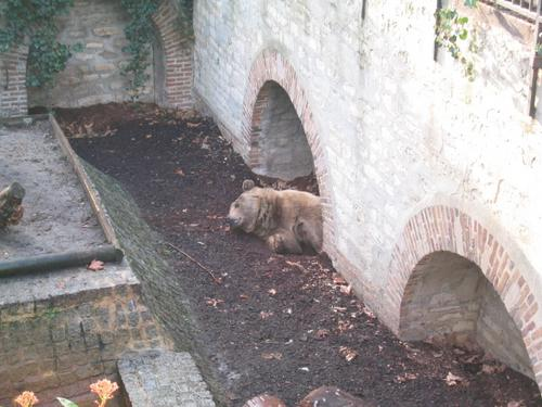 L'ours, frère
